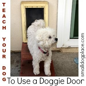 Teach Your Dog to Use a Doggie Door