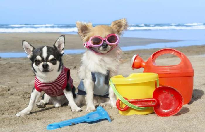 Protect Your Dog From the Heat this Summer:  5 Tips Just For You