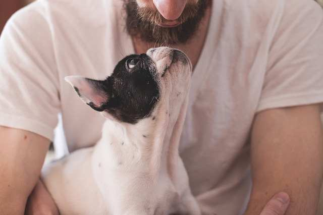 A man is holding his small dog while looking into his eyes.