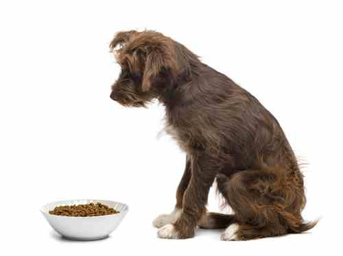Loss of appetite is common in elderly dogs.  Finding the best food for your elderly dog may be more challenging.