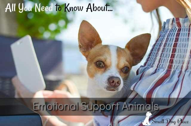 All You Need to Know About Emotional Support Animals