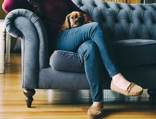 A person is sitting on a sofa holding a small emotional support dog.