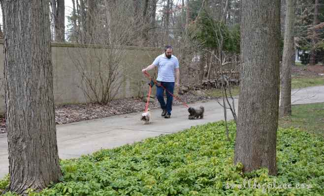 Walking two dogs down a path is a good way to exercise with your dog.