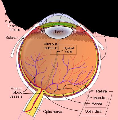 Anatomy of an Eye