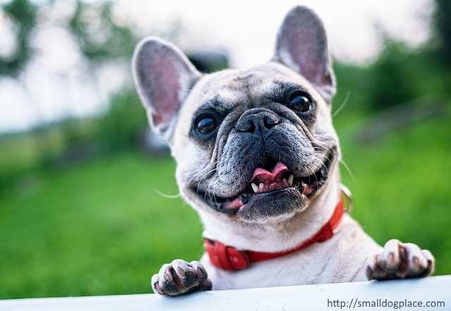 Cool Bulldog Ball Adorable Dog - xfrench-bulldog-640  Trends_70246  .jpg