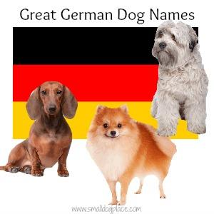 Great German Dog Names