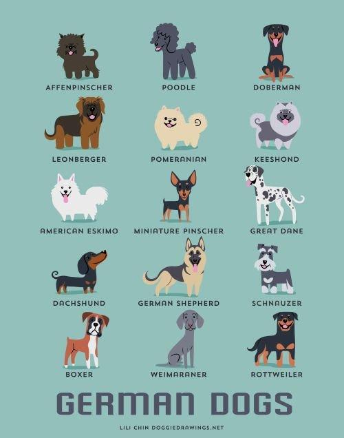 German Dog Names For Girls