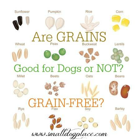 Grain Free Dog Food:  Should your dog avoid grains?  Find out.