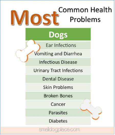 Pet Health Tips:  Common Problems in Dogs
