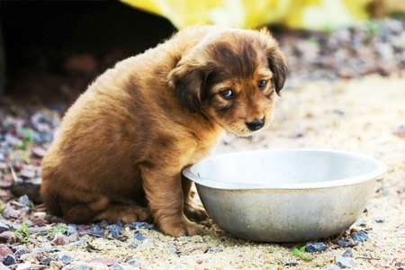 Your mealtime and your small dog's meal should be separate to prevent begging and other health problems.