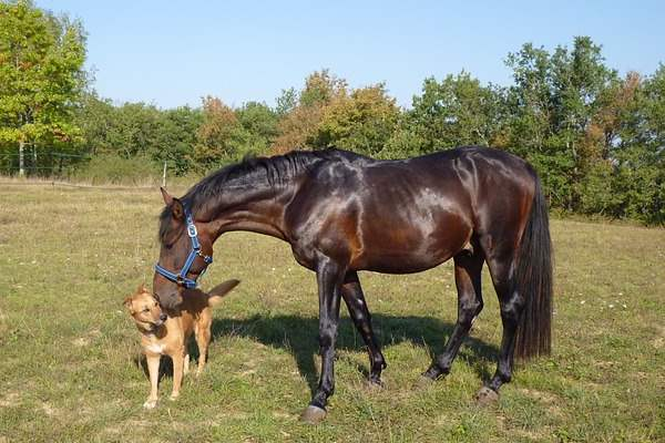 Keep your dog safe when visiting horse stables.