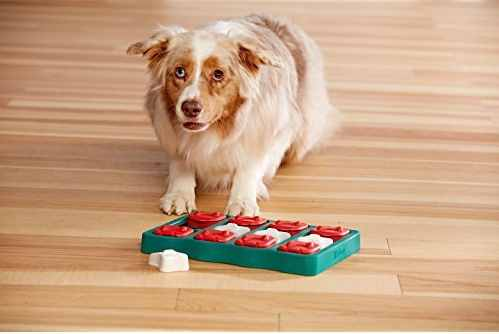Dog Puzzles Make Good Brain Games for Dogs