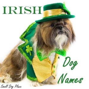 Names for an Irish Dog