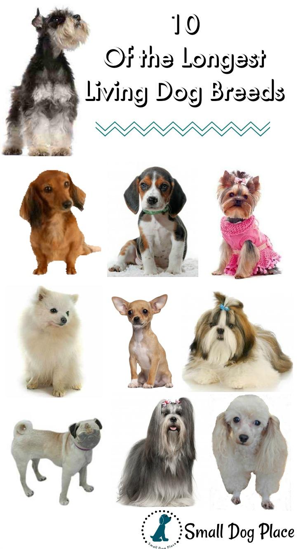 Ten of the Longest Living Dog Breeds