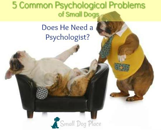 Five Common Psychological Problems observed in small breed dogs.