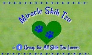 Miracle Shih Tzu Facebook Group