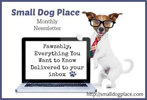 Small Dog Place Monthly Newsletter
