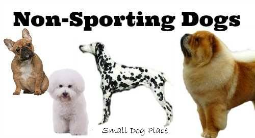 The Non-Sporting Group:  All of the small breed dogs that belong to this group.