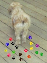 small dog paw prints party ideas