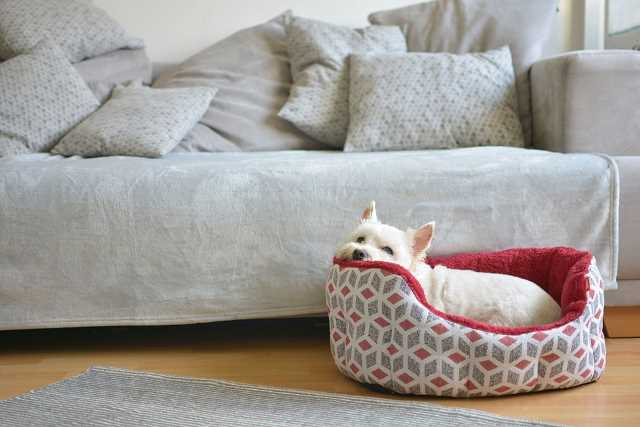 A room is shown with a covered sofa and a small West Highland White Terrier resting in a dog bed.