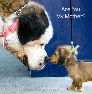 You will never meet the parents of the puppy you purchase in a pet store.