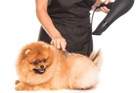 Always blow dry and brush your Pom at the same time to prevent mats from forming.