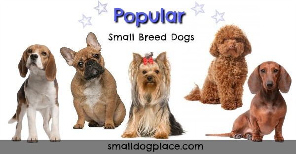 Group of Popular Small Breed Dogs