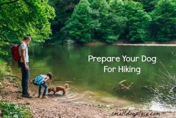 How to Prepare Your Dog for Hiking