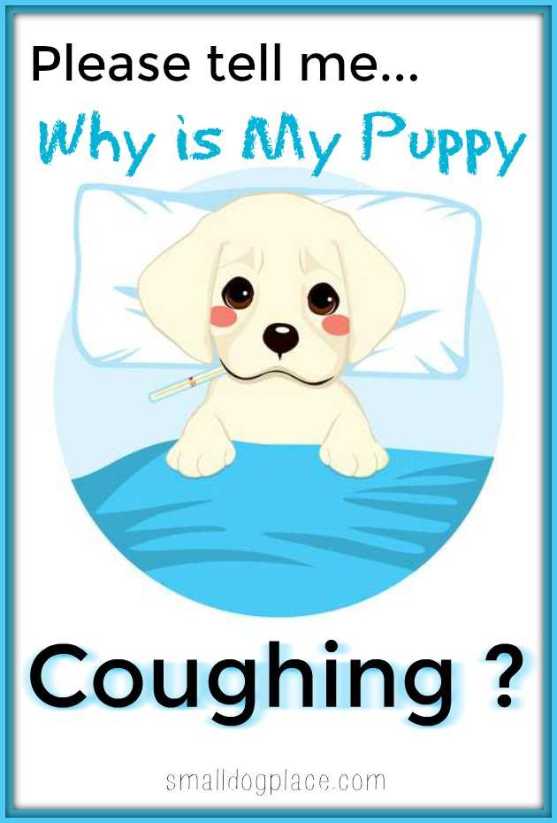 Why is My Puppy Coughing?