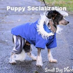 Guide to Socializing Your Puppy-link