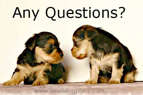 Questions Breeders ask of you