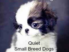 Small Dog Place All Things Small Breed Dogs