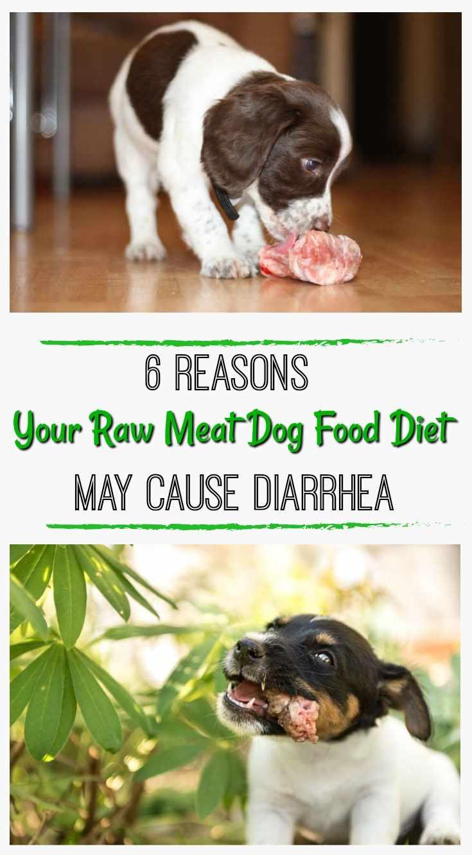 Best Dog Food For Shedding Control