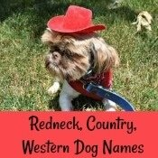 Country, Western, Redneck Dog Names