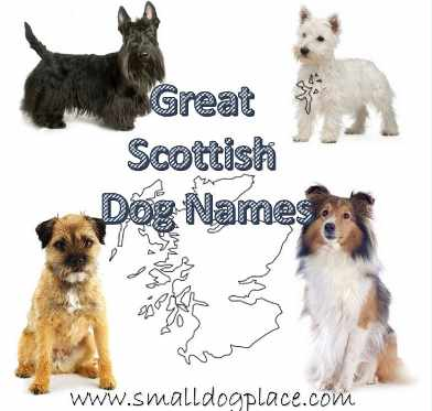 Scottish Dog Names for your dog originating in Scotland