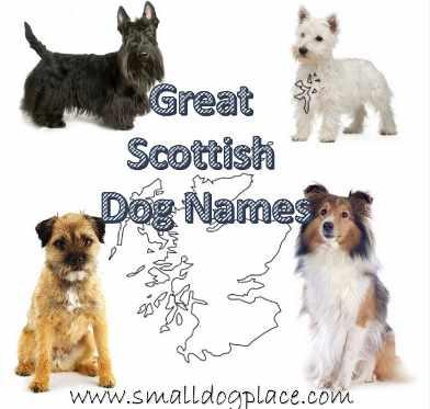 Scottish Dog Names for your dog originating in Scotland