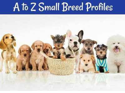 Not sure which dog breed is right for you?  Start here with links to the world's smallest dogs along with breed profiles and information.