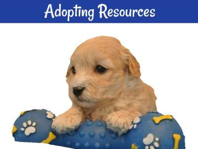 If you are thinking about adoption, here is a  page that provides all the info you need to begin your search.