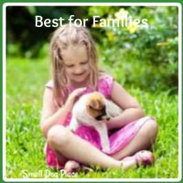 Best Small Breed Dogs for Children and Families