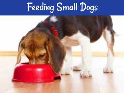 Feeding small dogs  All the resources in one place.
