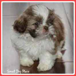 Small Fluffy Breeds