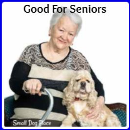 Breeds good for seniors