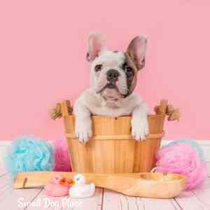 Grooming small breed dogs at home can be fun and save you money.  Here's how.