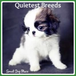 Quietest Breeds