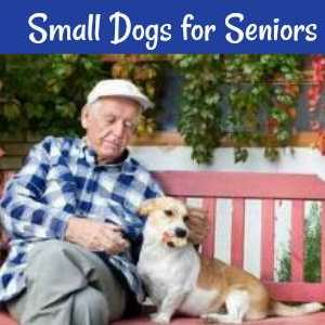 Seniors have special needs when it comes to dogs.  Here's a list of small dogs that make great pets for older people.