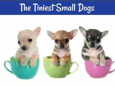 Want something tiny?  Here is a list of the world's smallest dogs.