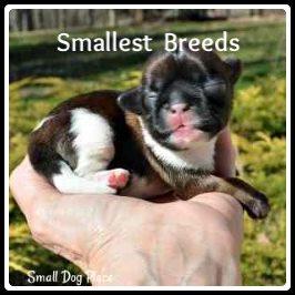 Smallest Breeds