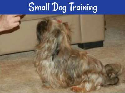 Links to many articles about training a small dog.