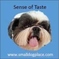 Dog's Sense of Taste