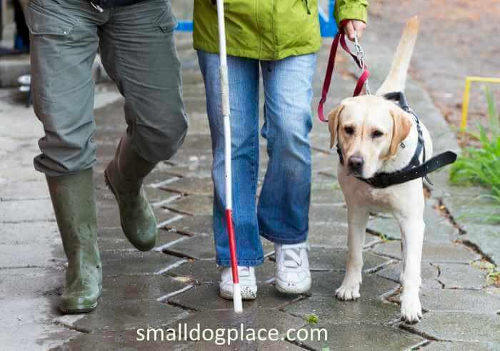 Training Requirements for Service Dogs